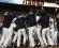 Fotografía tomada el pasado 16 de octubre en la que se registró a un grupo de jugadores de los Gigantes de San Francisco al celebrar su victoria sobre los Cardenales y la obtención del título de la Liga Nacional de la MLB, en el AT&T Park de San Francisco (California, EE.UU.). EFE/Archivo